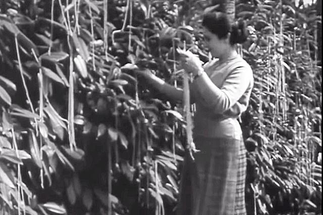Storie di mattarello n.9- Gli spaghetti al pomodoro